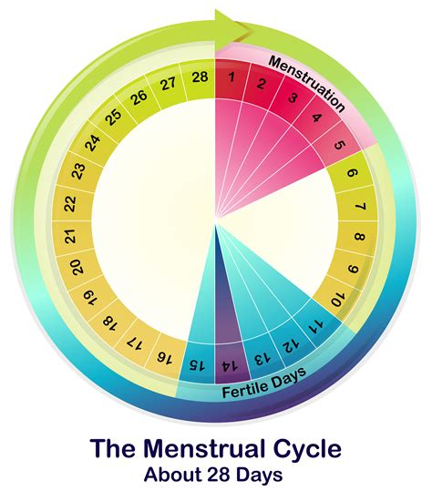 advocare challenge and menstrual cycle picture 7