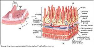infection of colon picture 1