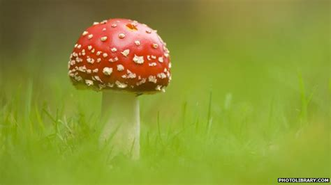 facts about fungi picture 5