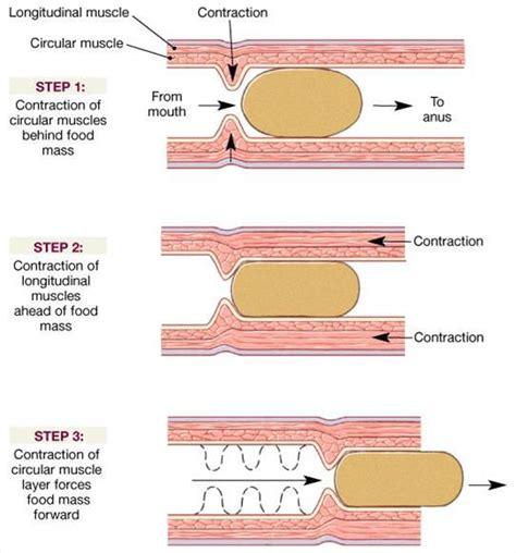 colon contractions picture 6