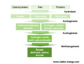 digestion of carbohydrates picture 7