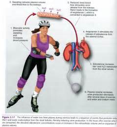 will exercise increase blood pressure picture 7
