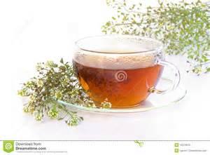 yarrow tea picture 19