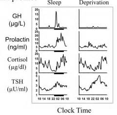 prolactin sleep picture 7