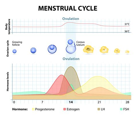 Gain weight during menstrual cycle picture 2