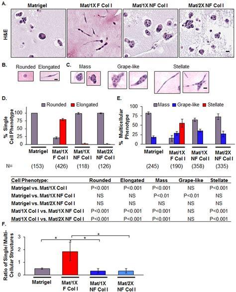 collagen in pregnancy picture 3