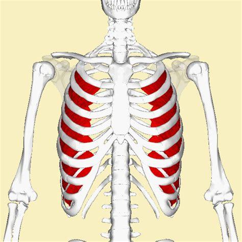intercostsal muscle strain picture 11