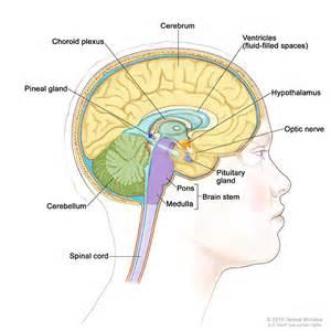 brain thyroid pulmonary syndrome prognosis picture 9