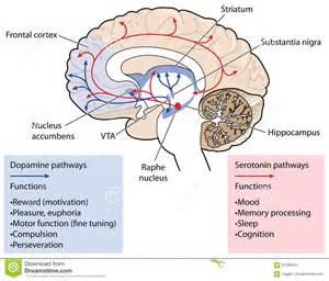 Dopamine serotonin mountain states health picture 2