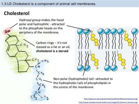 cholesterol function picture 10
