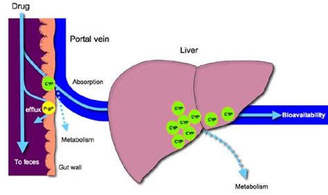 anesthesia and liver enzymes picture 6