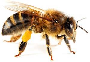 honey bees for sale in alabama picture 6