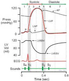 electrocardiograms directly measure action potentials in individual picture 2