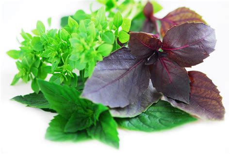can you get caught using herbal clean on picture 8