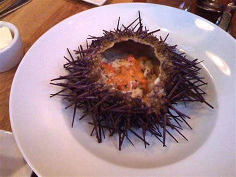 cholesterol in sea urchin picture 14