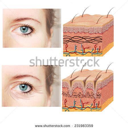 skin structure visuals picture 17