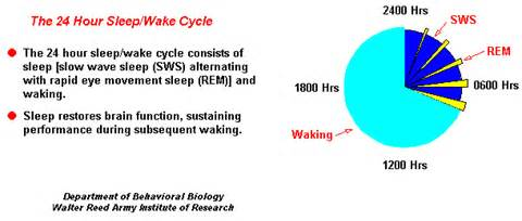 sleep and waking cycles picture 11