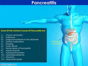 canine diet pancreais picture 15