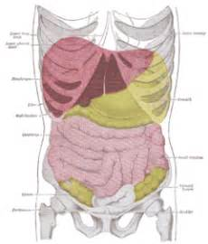 liver pain that goes above my rib cage picture 14