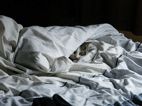 dangers of sleeping under the blankets picture 9