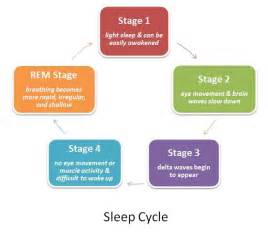 rem sleep cycle picture 7