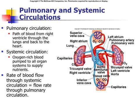 circulation loss after frature picture 7