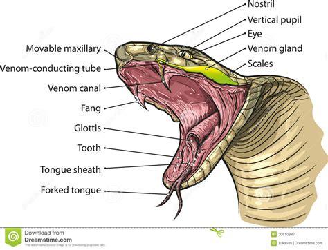 lip venom picture 13