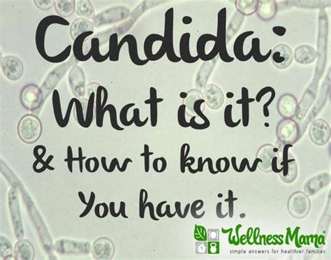 how to tell if you are allergic candida picture 3