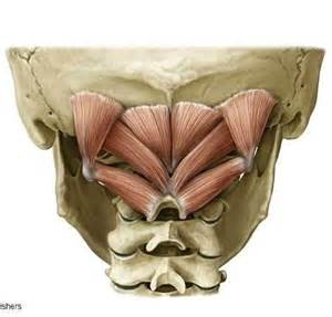 occipital neurectomy surgery picture 17