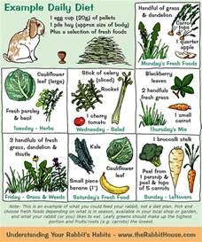 bunnies diet picture 2