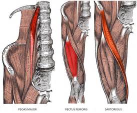 hip flexor muscle pull picture 15
