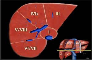 liver segmental anatomy radiology istant picture 1