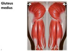 glutamus muscle picture 7