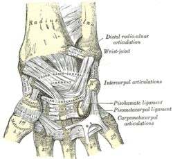 distal radial ulnar joint picture 14