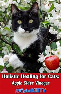 apple cider vinegar for cys is in cats picture 12