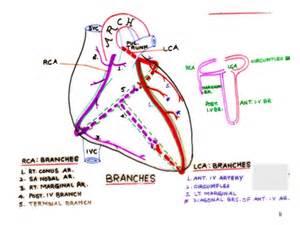 blood flow in uterus picture 2
