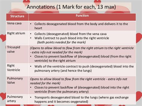 blood flow to and from the heart picture 5