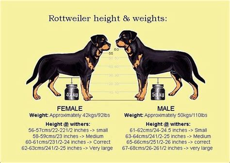 aging rotweiler picture 6