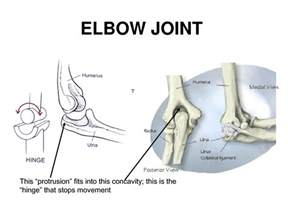 elbow joint picture 7
