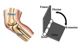ellipsoid joint picture 2