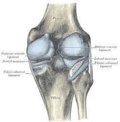 knee joints that picture 2