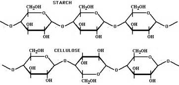 chemical structure of starch picture 2