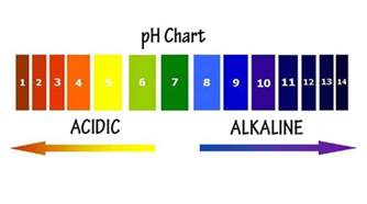 alkaline environment to kill herpes picture 18