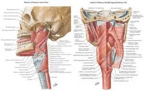 bladder repair technique picture 21
