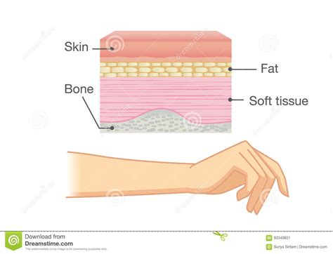 free illustrations of human skin picture 21
