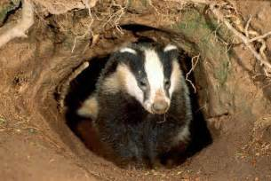 badger sleep balm picture 14