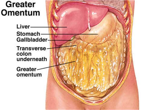 colon and liver cancer picture 15