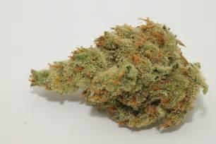 marijuana picture 13
