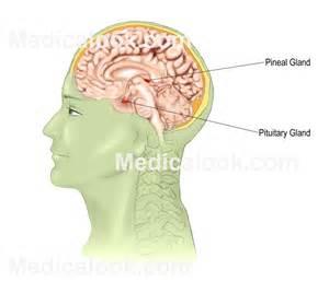 gland picture 3