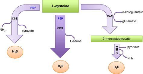 gastrointestinal hydrogen sulfide el picture 1